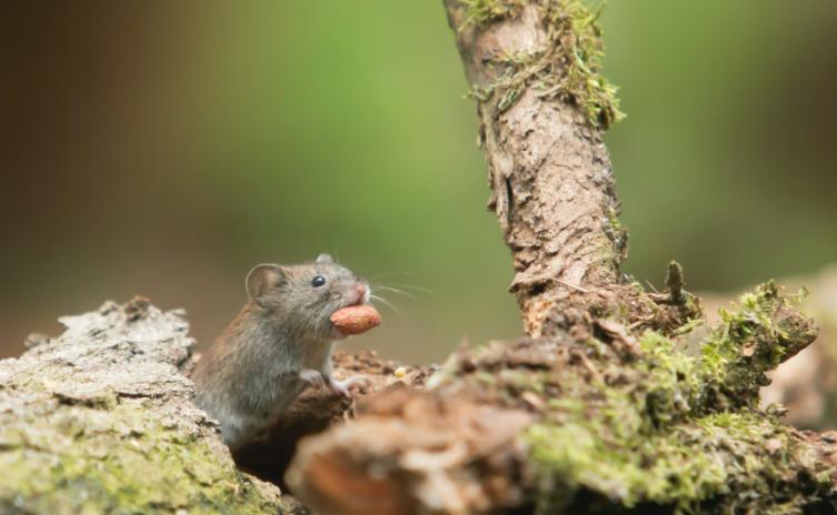 Tips Mencegah Tikus Masuk Gudang yang Ampuh dengan Bahan Alami
